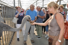 Bezoek aan struisvogelfarm